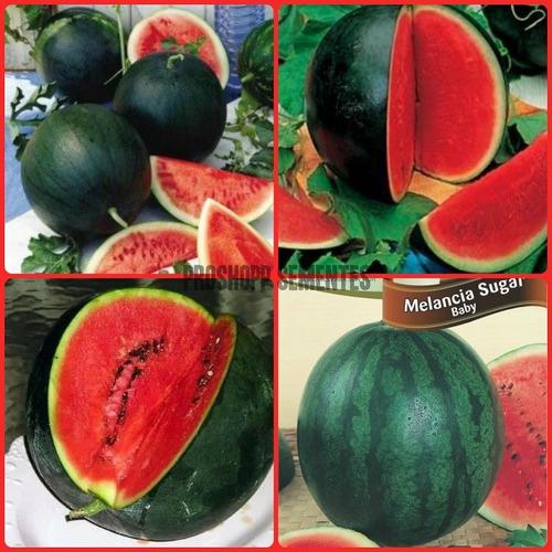 40 sementes da melancia sugar baby super doce