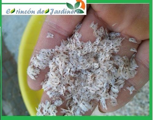 400 semillas kiri (paulownia) el arbol que mas rapido crece