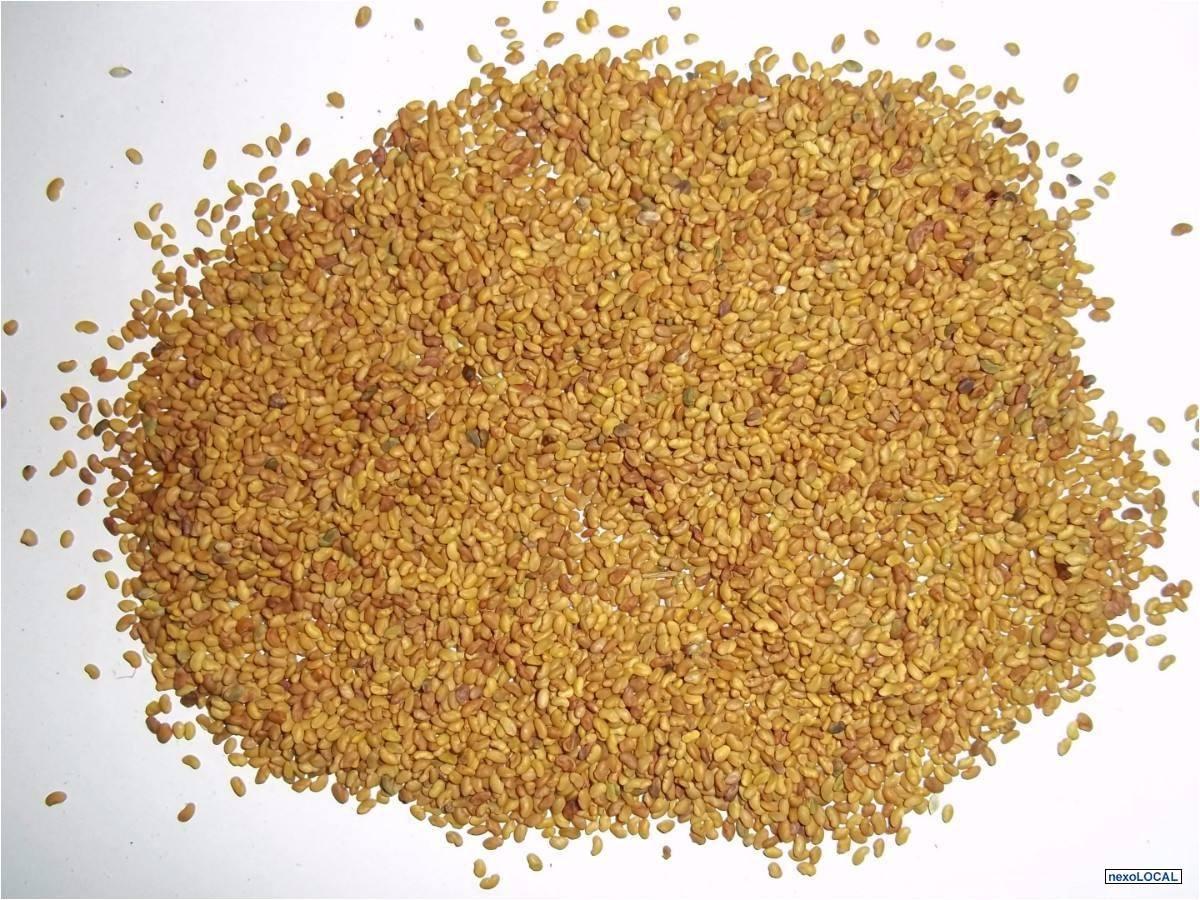 4000 semillas de alfalfa para sembrar o para germinados for Plantar hortensias semillas