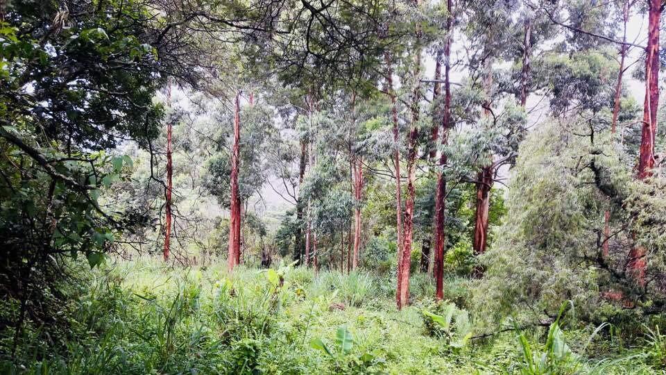 4.7 hectáreas en quinara con cabaña