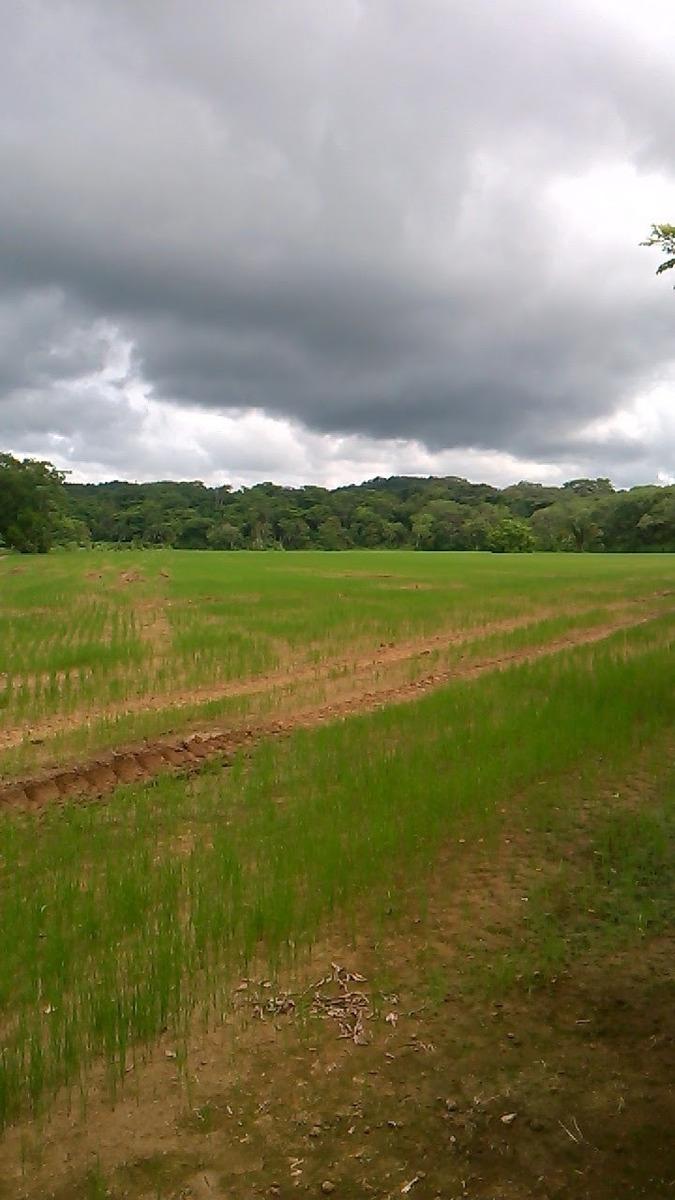 48 hectáreas plano y escritura al dia