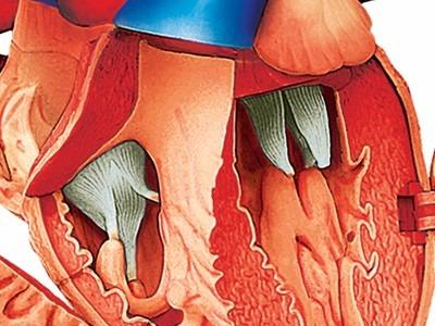 4d Human Modelo Corazón De Lujo Anatomia Humana 20 Piezas ...