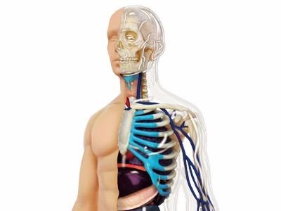 4d Human Modelo Cuerpo Humano 60pz Anatomia Inmediata - $ 185.990 en ...