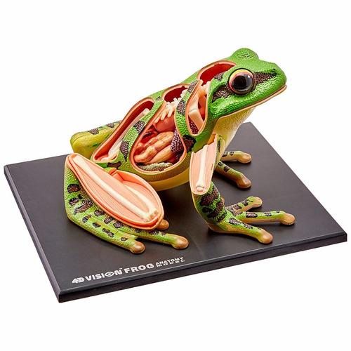4d vision - modelo anatomia sapo - 4d master 26104