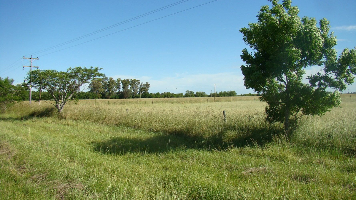 5 has agrícolas  sobre ruta 36