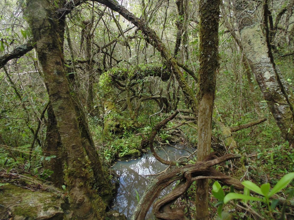 5 hect sierras de rocha arroyo manantiales hermosas vistas