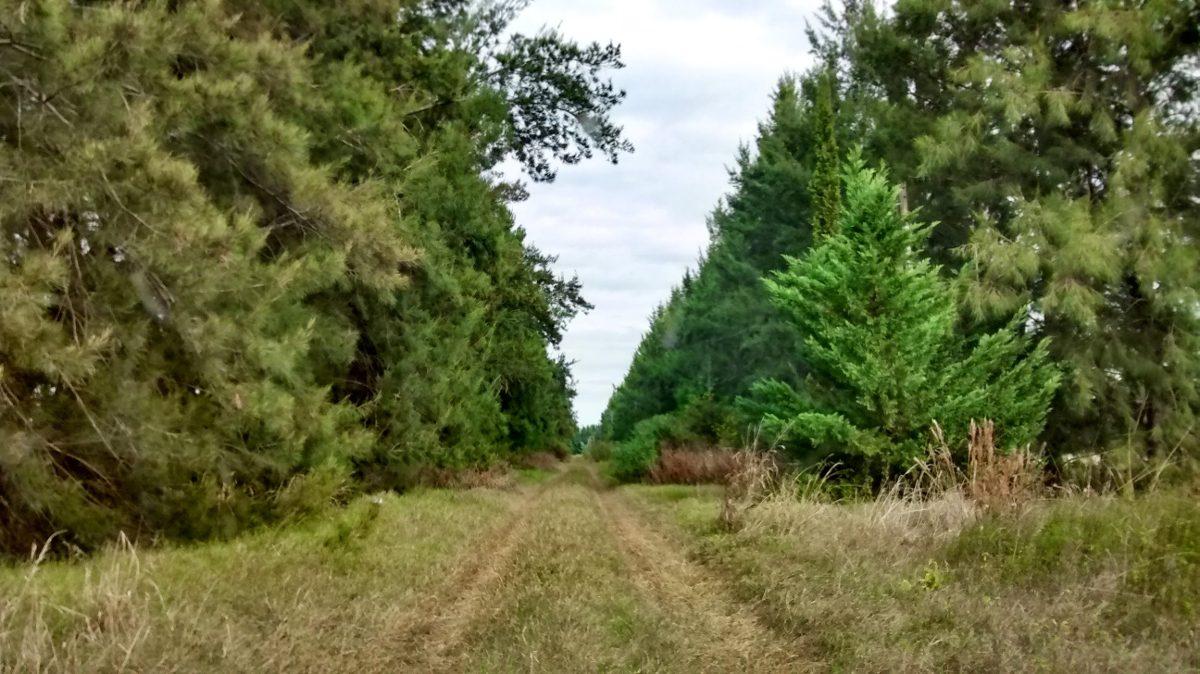 5 hectáreas con mejoras en san pedro