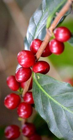 5 kg. cafe verde grano arabico espe colombia 85 pts 30% off