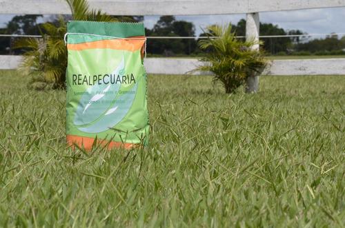5 kg de sementes de grama batatais ( rende 500 a 750 m2)