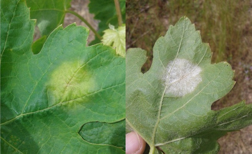5 lt fungicida p/ plantas, oídio, míldio, etc. + 10 lt adubo