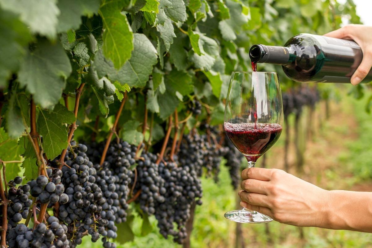 Resultado de imagem para uva syrah