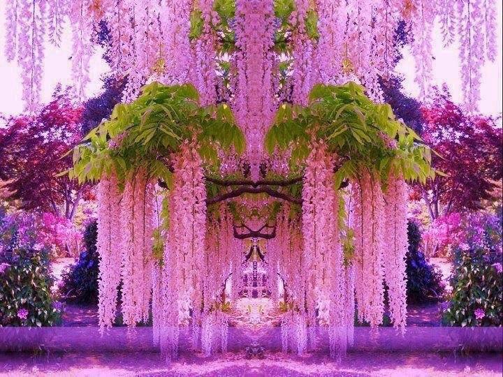 5 Sementes De Lindas Flores Wisteria Glicínias Rosas Raras R 24