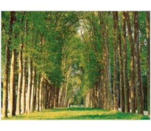 50-087 camino arbolado bosque rompecabezas 500 piezas tomax