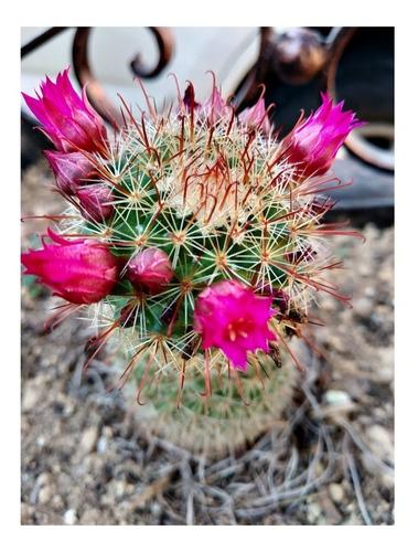 50 semillas de cactus diversos especies diferentes.