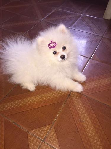 500 adesivos para pet shop eva c/glitter cães