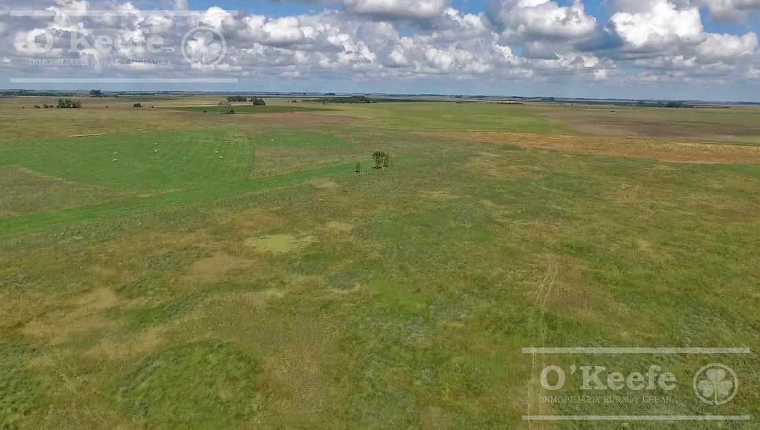 500 has campo ganadero con 30 % de aptitud agrícola