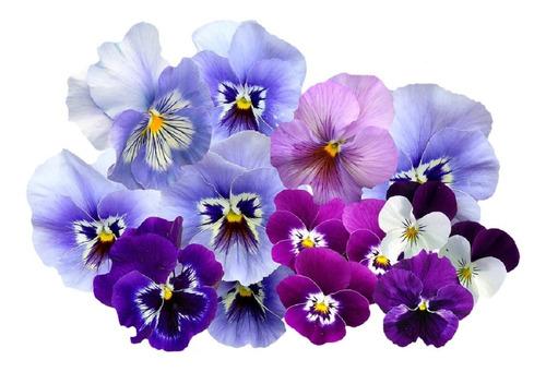 500 sementes amor perfeito sortido # entrega garantida