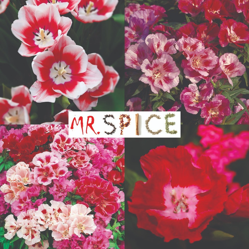 3de5d3b03e 500 sementes da flor mini azaleia de cores sortidas p  mudas. Carregando  zoom.