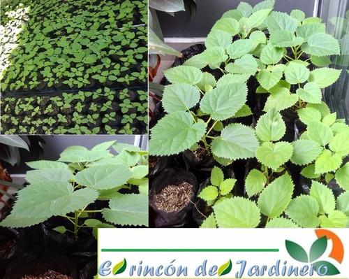 5200 semillas paulownia 9501 mayor crecimiento+ libro