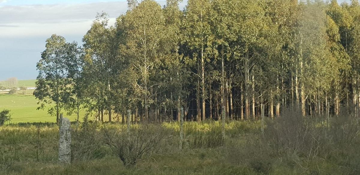 534 has, forestal, ganadero agricola  con renta