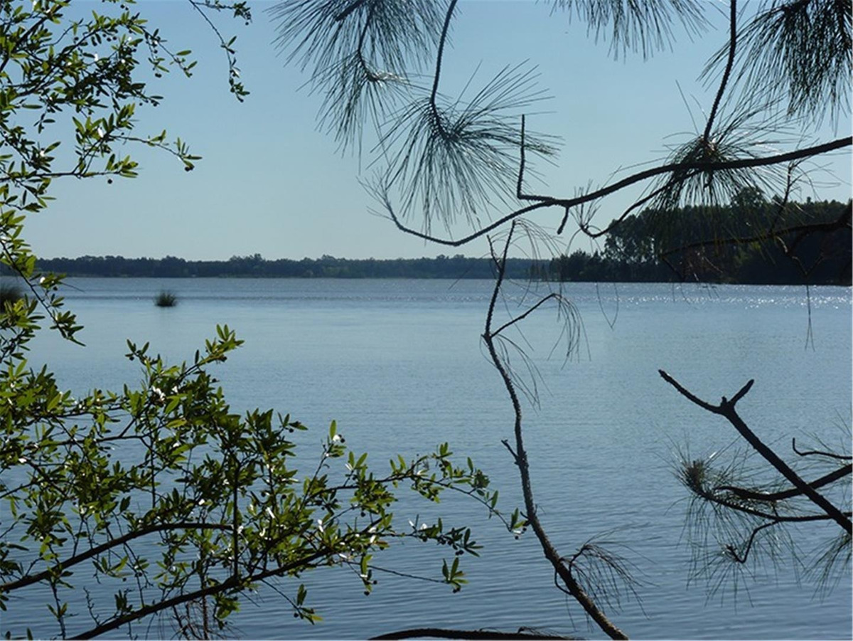 54 has. aptas forestación, con costa de lago  federación