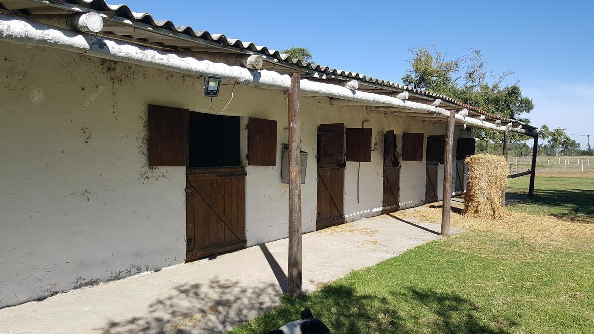 5,5 has chacra en venta en chascomus - ideal cria de caballos -  importantes mejoras - retasado !!!!!