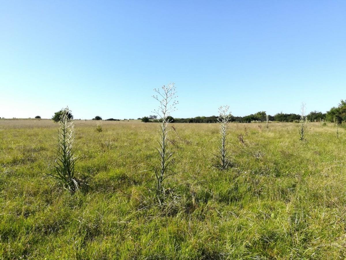 56 hectáreas en duraznito. ref: 1.054