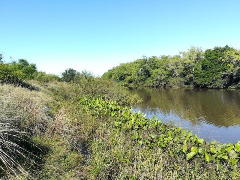 56 hectáreas en soriano, risso