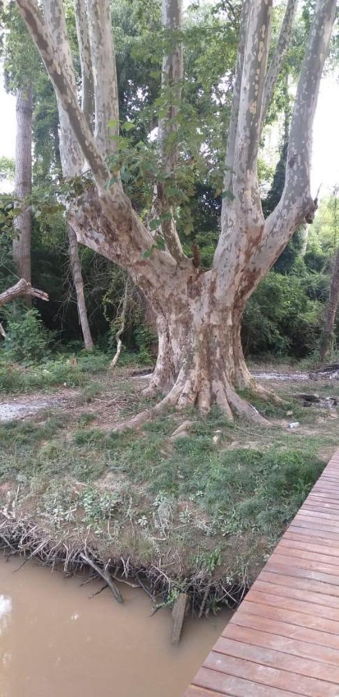 58 hectareas, en islas de campana