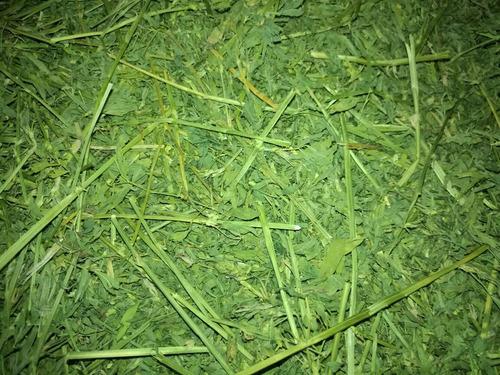 5kg de heno de alfalfa orgánica para cuyo y conejo