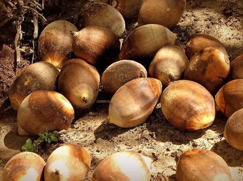 6 litro azeite / óleo  do coco babaçu do maranhão 100% novo