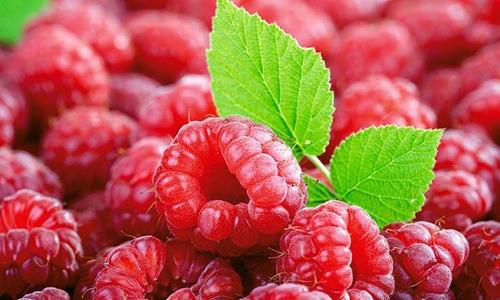6 mermeladas de frambuesas light jberries 454grs premium