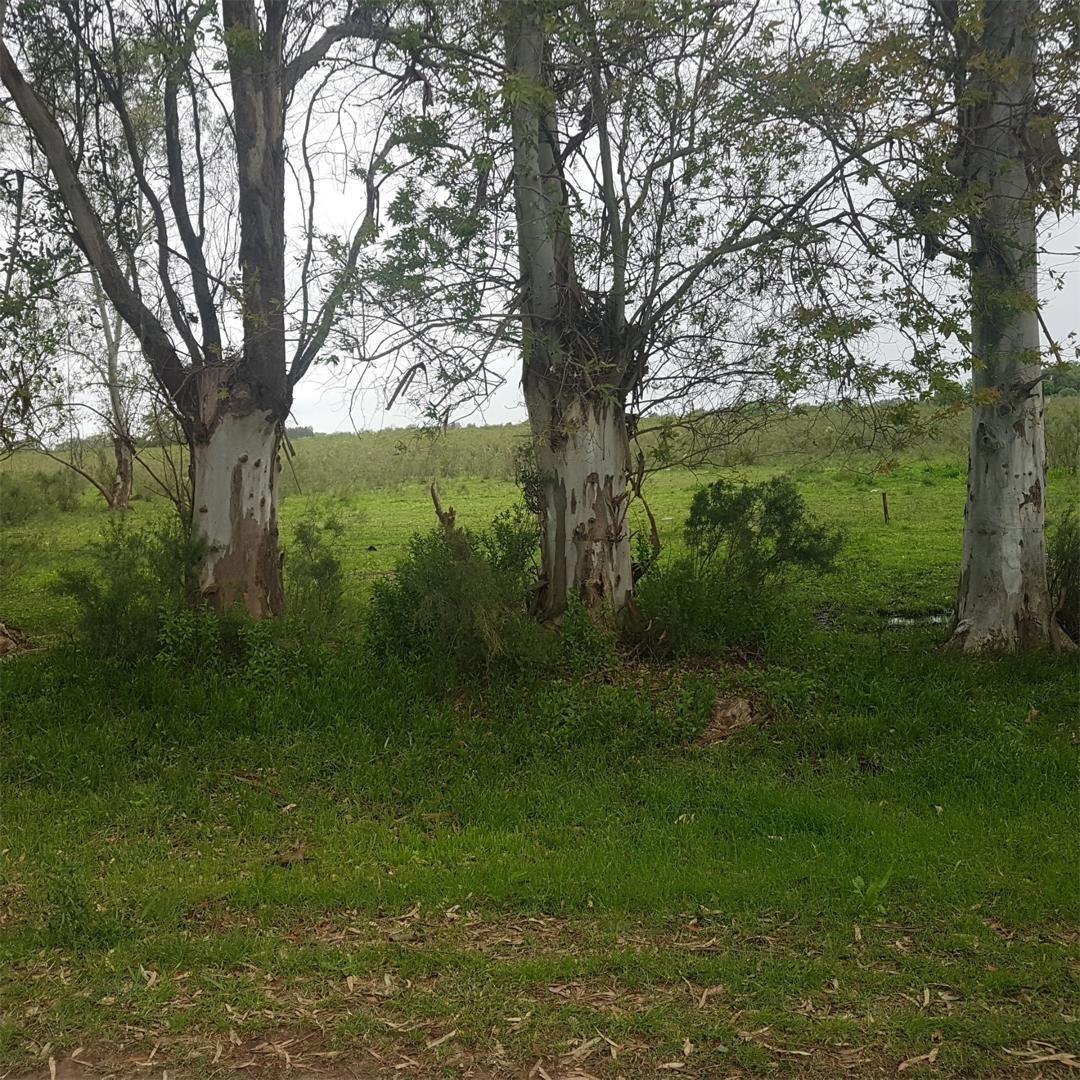 643 e/ 10 y 11: 2 hectáreas y media en venta