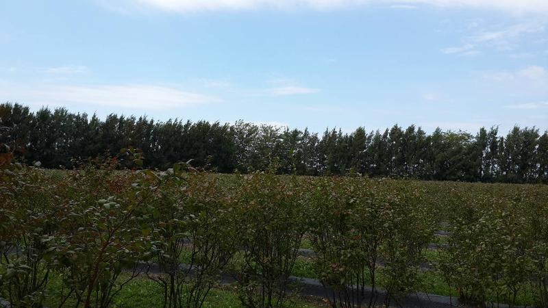 7 ha agrícolas con plantación de arandanos orgánica certificada