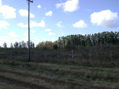 7 hectáreas sin mejoras en marcos paz