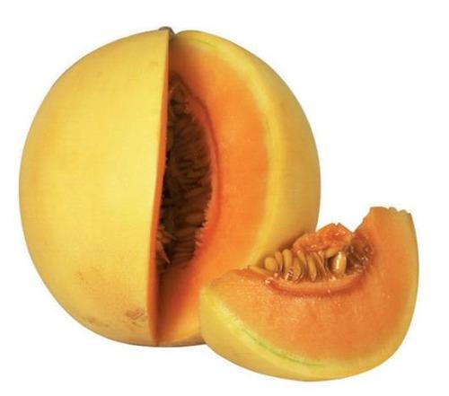 70 sementes melão orange p mudas sitio chacara
