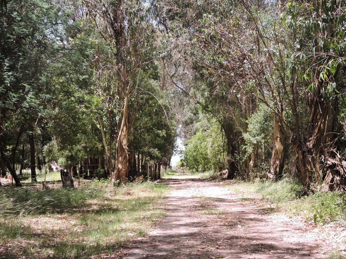 78 hectareas campo en veronica, punta indio