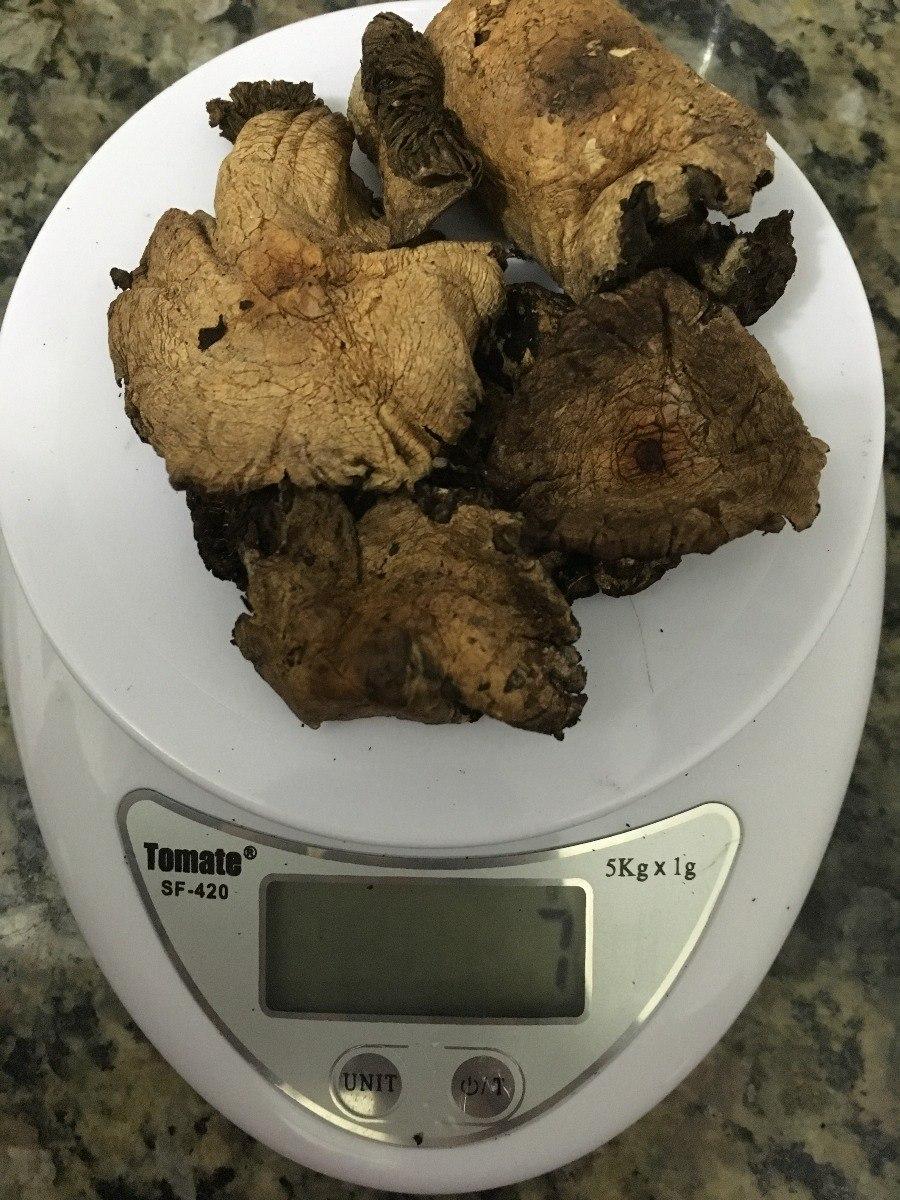 7g Cogumelo Psilocybe Cubensis Desidratado Conservado Em Mel