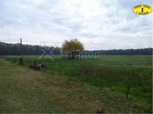 80 ha de campo con casa - ruta 28 - 2 km - general rodríguez