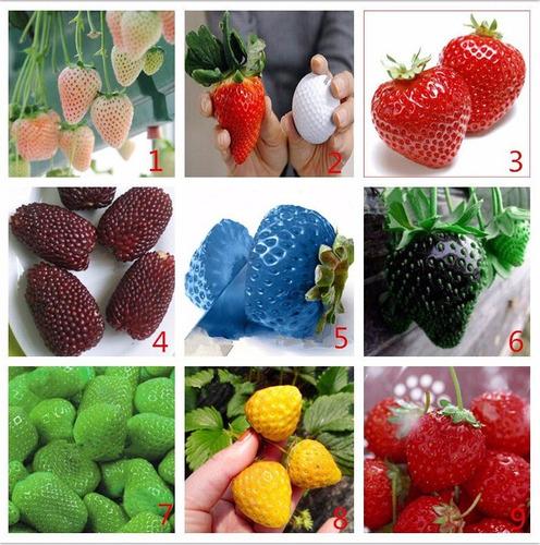 80 sementes de morangos coloridos 9 cores