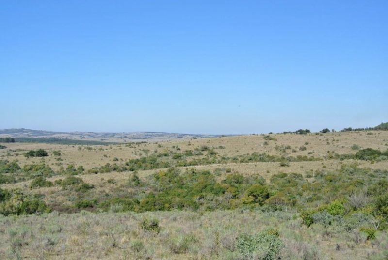 85 hectáreas | campo | ruta 39 y 12 kms de camino vecinal