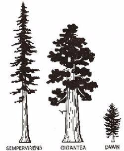 simple pine cone tattoo