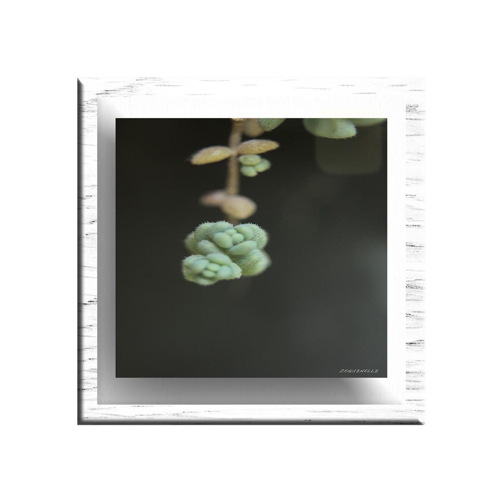 8x10 - Negro - Negro - Argan Fotografia Enmarcada Con Vidrio ...