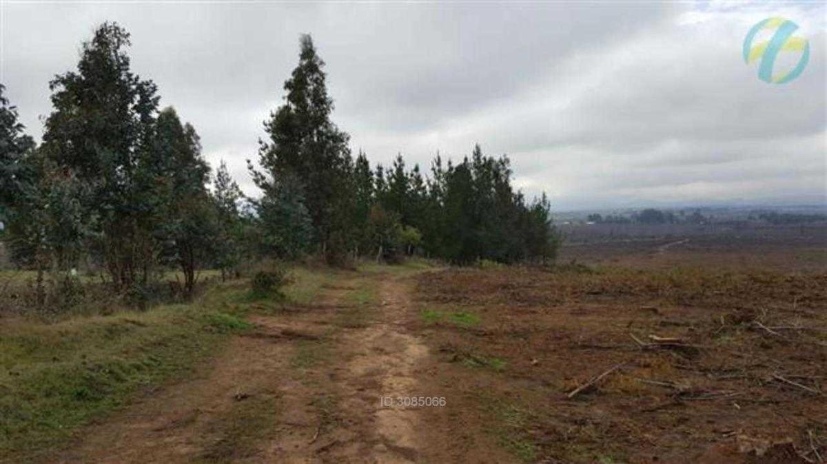 9 kms al poniente de san nicolas por rut