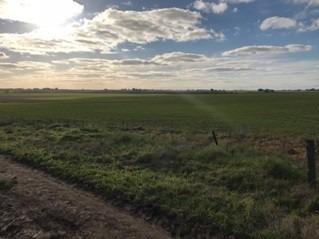 950 has agrícolas-ganaderas-forestales en  soriano