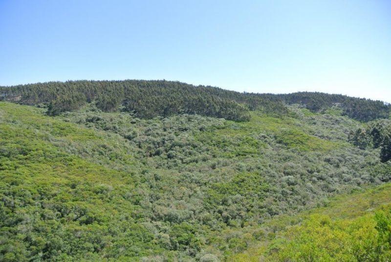 97 hectáreas | campo | ruta 15 y 8 kms de camino vecinal