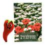 Livro Coleção Enciclopédia De Suculentas E Cactos Volume 7