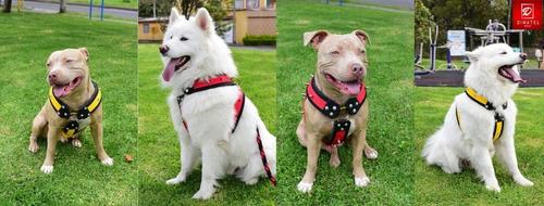 Arnes De Seguridad Canino Especial Razas Grandes
