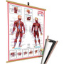 Mapa Corpo Humano Muscular Medicina Banner Moldura Laminado