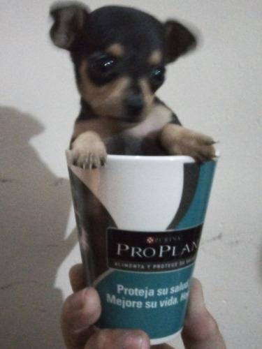 Pincher Tea Cup !!!!